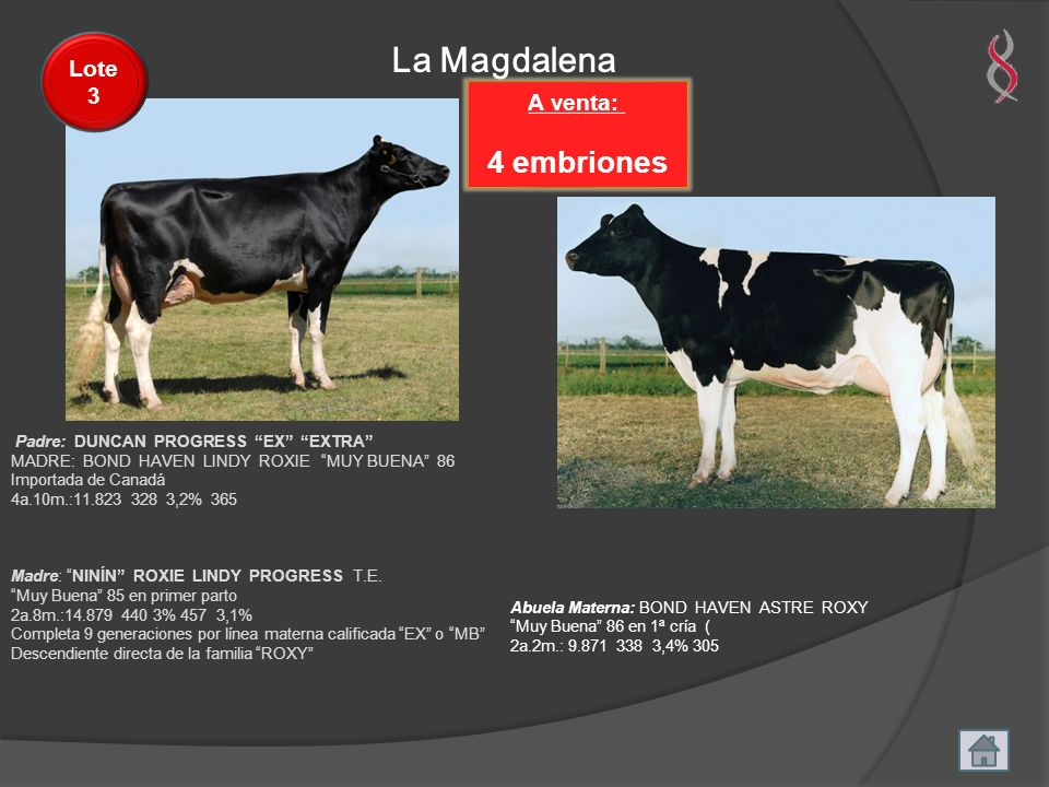 La Magdalena 4 embriones Lote 3 A venta: