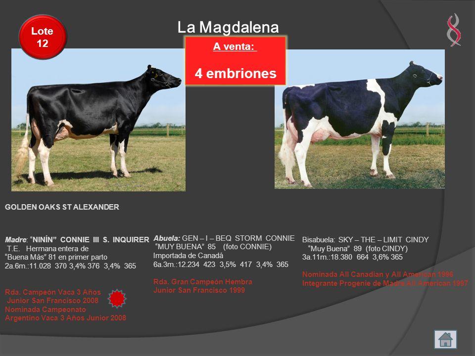 La Magdalena 4 embriones Lote 12 A venta: GOLDEN OAKS ST ALEXANDER
