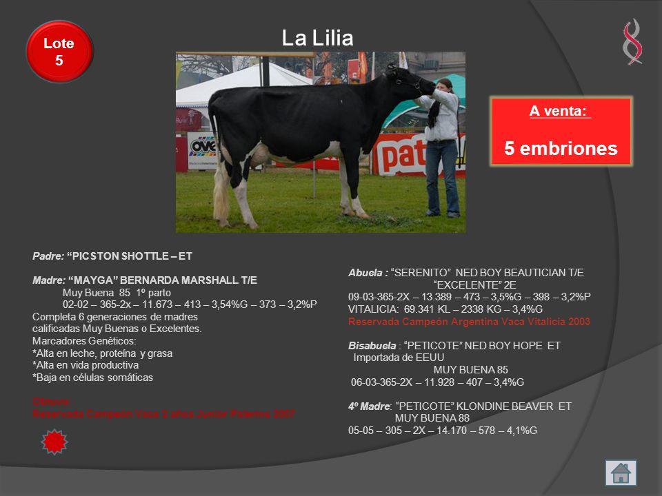 La Lilia 5 embriones Lote 5 A venta: Padre: PICSTON SHOTTLE – ET