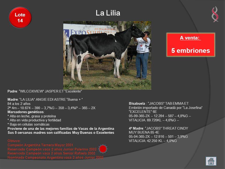 La Lilia 5 embriones Lote 14 A venta: