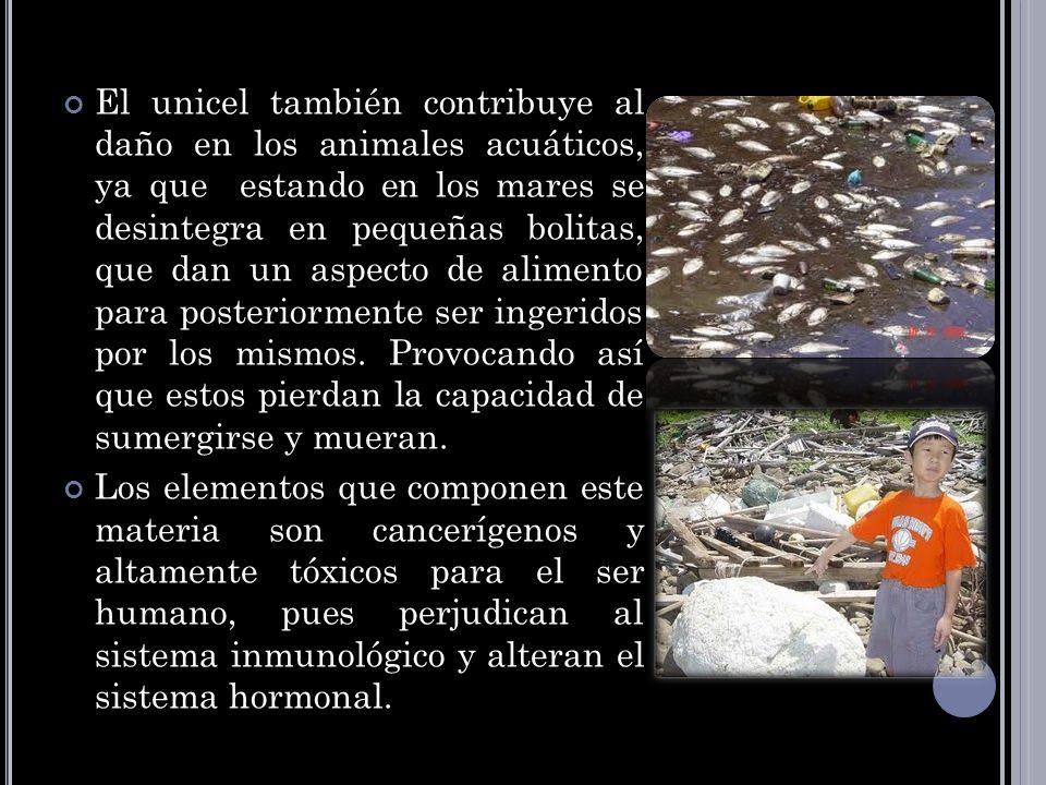 El unicel también contribuye al daño en los animales acuáticos, ya que estando en los mares se desintegra en pequeñas bolitas, que dan un aspecto de alimento para posteriormente ser ingeridos por los mismos. Provocando así que estos pierdan la capacidad de sumergirse y mueran.