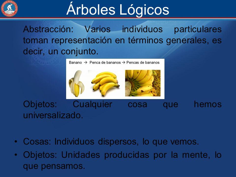 Árboles Lógicos Abstracción: Varios individuos particulares toman representación en términos generales, es decir, un conjunto.