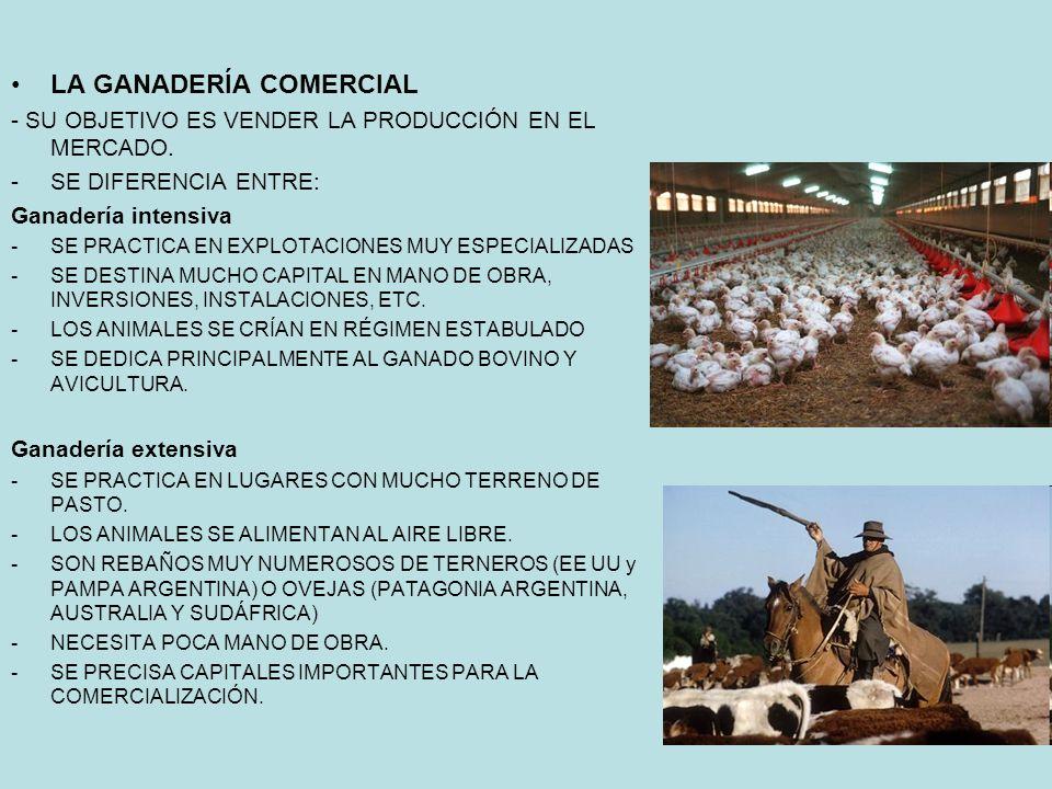 LA GANADERÍA COMERCIAL