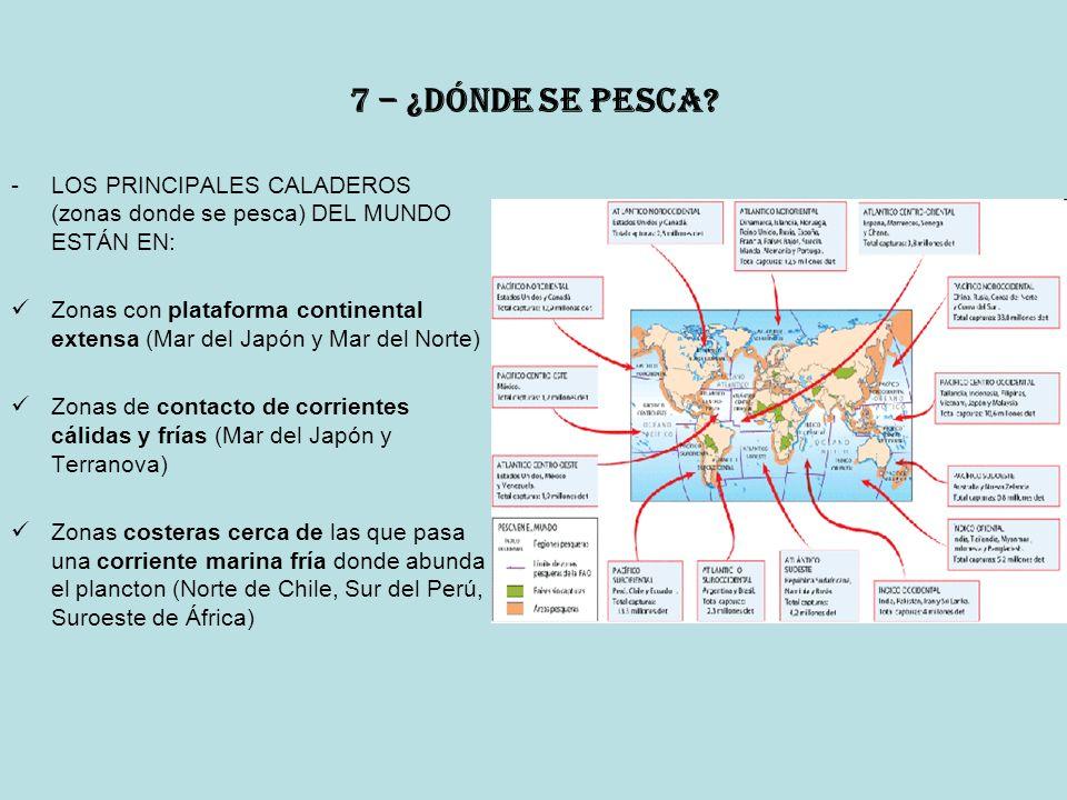 7 – ¿dónde se pesca LOS PRINCIPALES CALADEROS (zonas donde se pesca) DEL MUNDO ESTÁN EN: