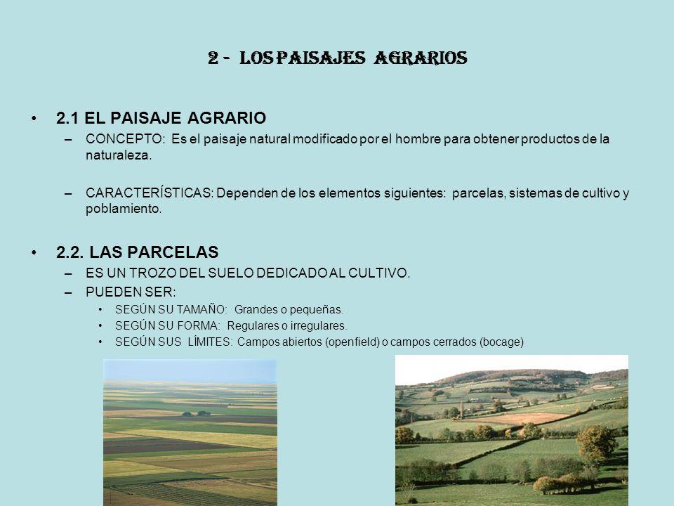 2 - LOS PAISAJES AGRARIOS