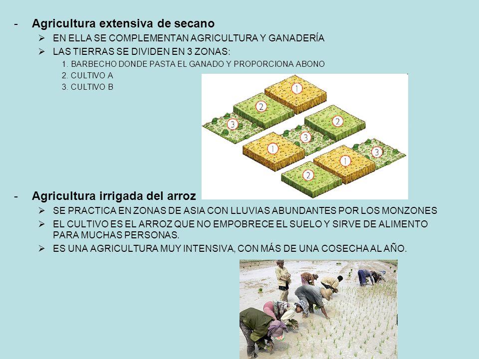 Agricultura extensiva de secano