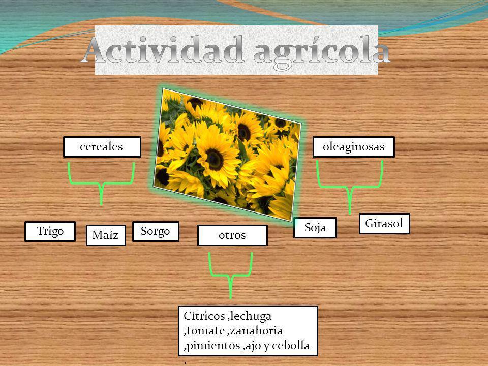 Actividad agrícola cereales oleaginosas Girasol Soja Trigo Sorgo Maíz