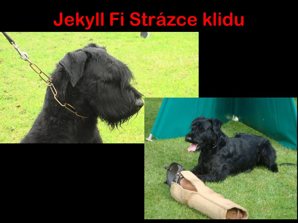 Jekyll Fi Strázce klidu