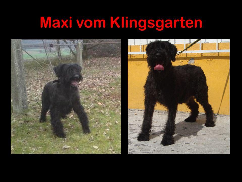 Maxi vom Klingsgarten