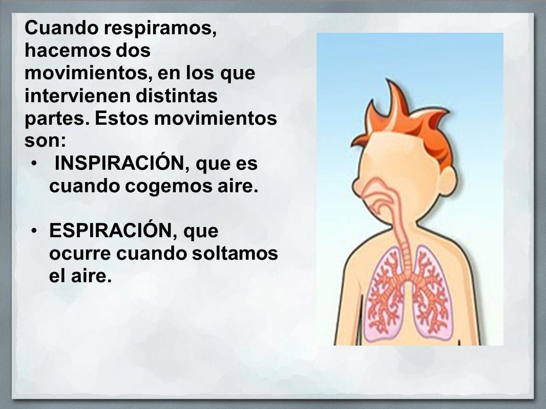 Cuando respiramos, hacemos dos movimientos, en los que intervienen distintas partes. Estos movimientos son: