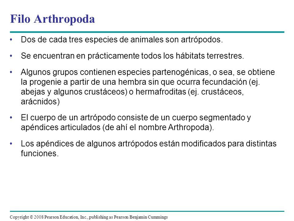 Filo Arthropoda Dos de cada tres especies de animales son artrópodos.