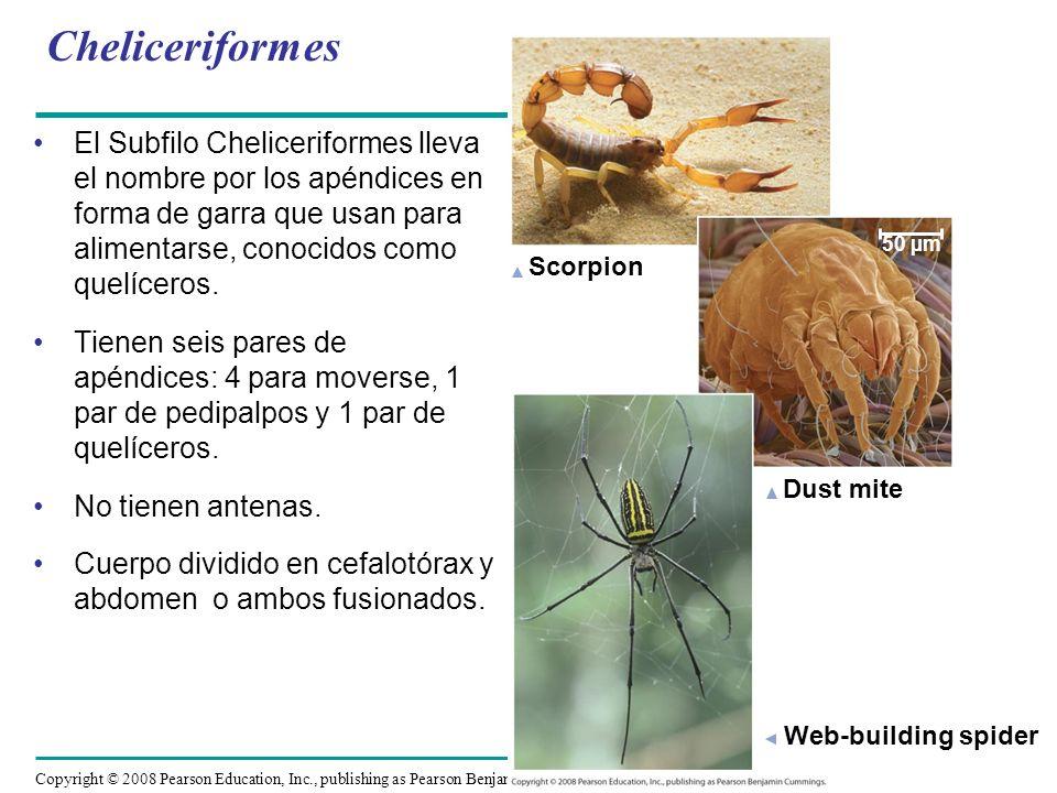 CheliceriformesScorpion. Dust mite. Web-building spider. 50 µm.
