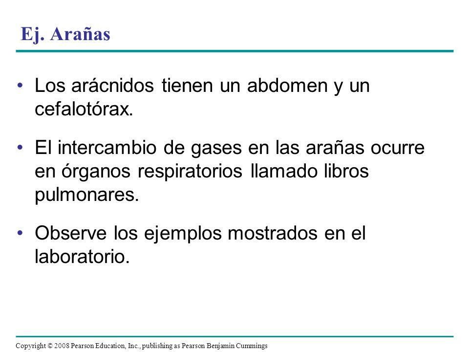 Ej. ArañasLos arácnidos tienen un abdomen y un cefalotórax.