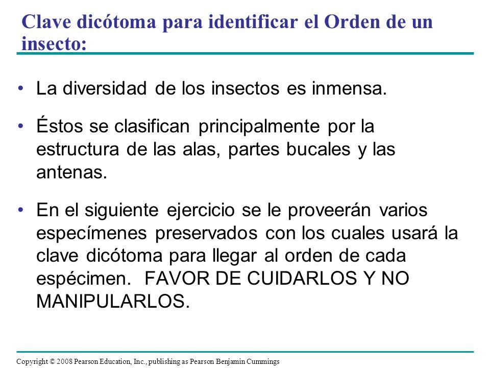 Clave dicótoma para identificar el Orden de un insecto: