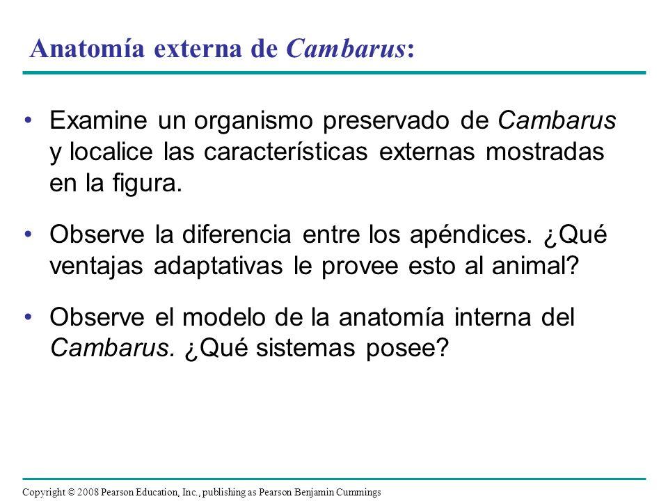 Anatomía externa de Cambarus: