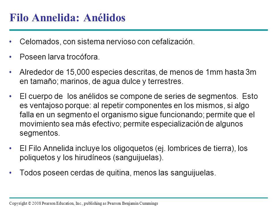 Filo Annelida: Anélidos