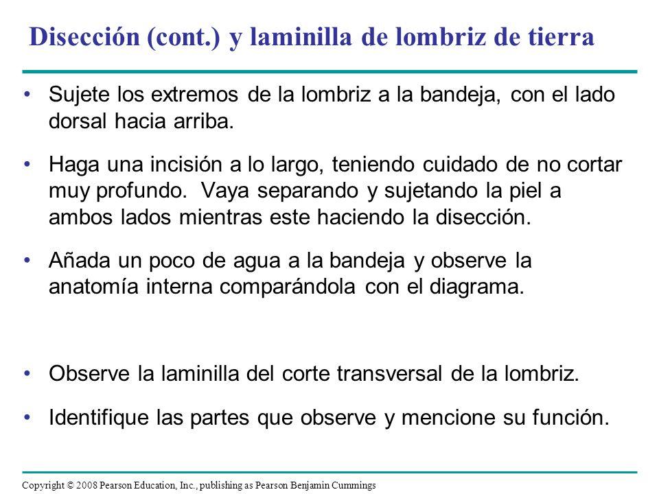 Disección (cont.) y laminilla de lombriz de tierra