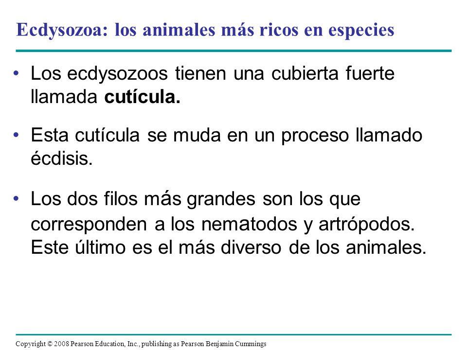 Ecdysozoa: los animales más ricos en especies
