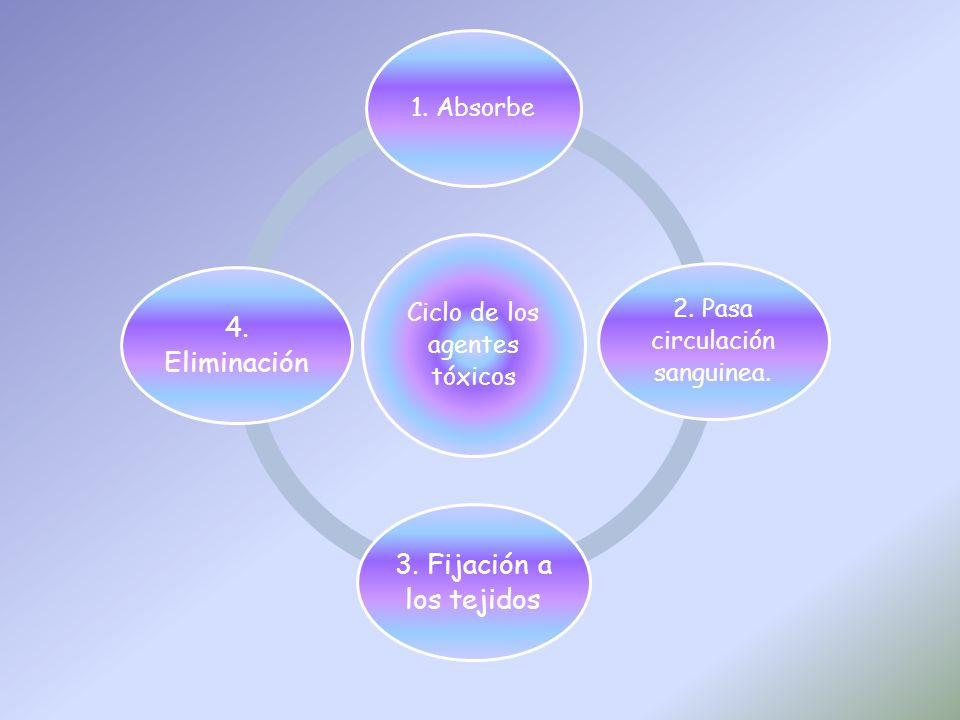 Ciclo de los agentes tóxicos 1. Absorbe 2. Pasa circulación sanguinea.