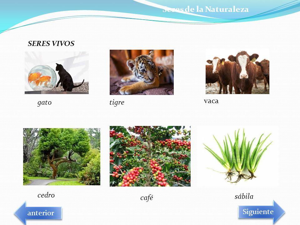 Seres de la Naturaleza SERES VIVOS gato tigre vaca cedro café sábila
