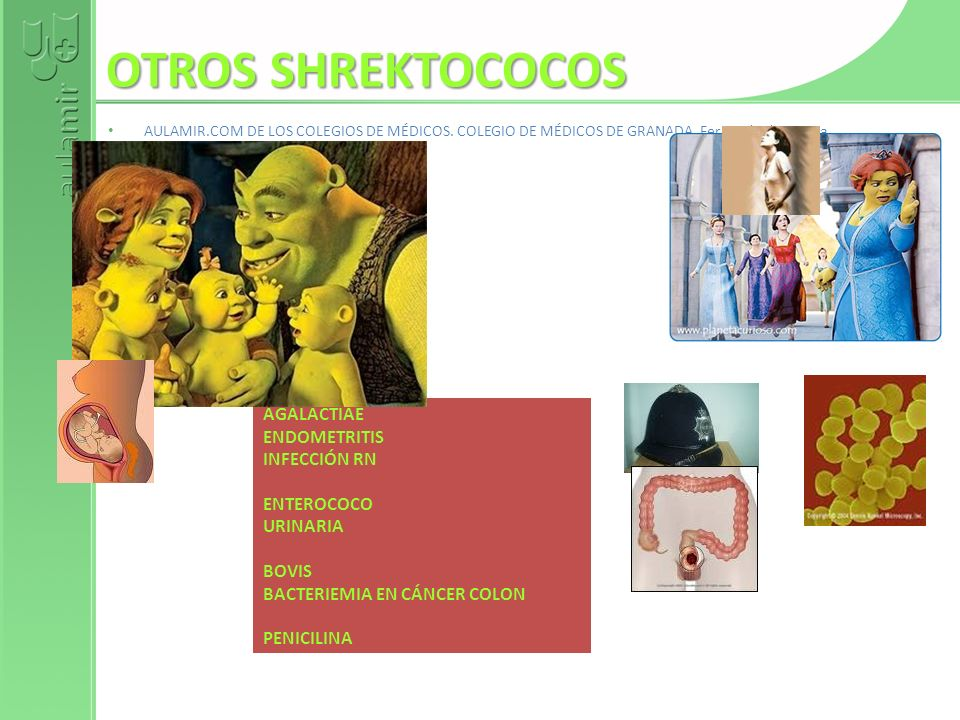OTROS SHREKTOCOCOS AGALACTIAE ENDOMETRITIS INFECCIÓN RN ENTEROCOCO