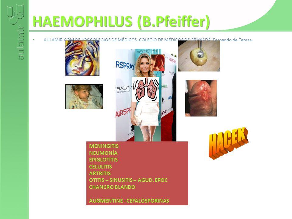 HAEMOPHILUS (B.Pfeiffer)