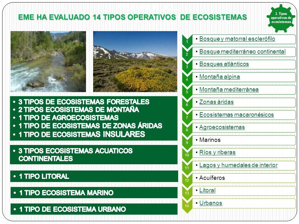 3. Tipos operativos de ecosistemas