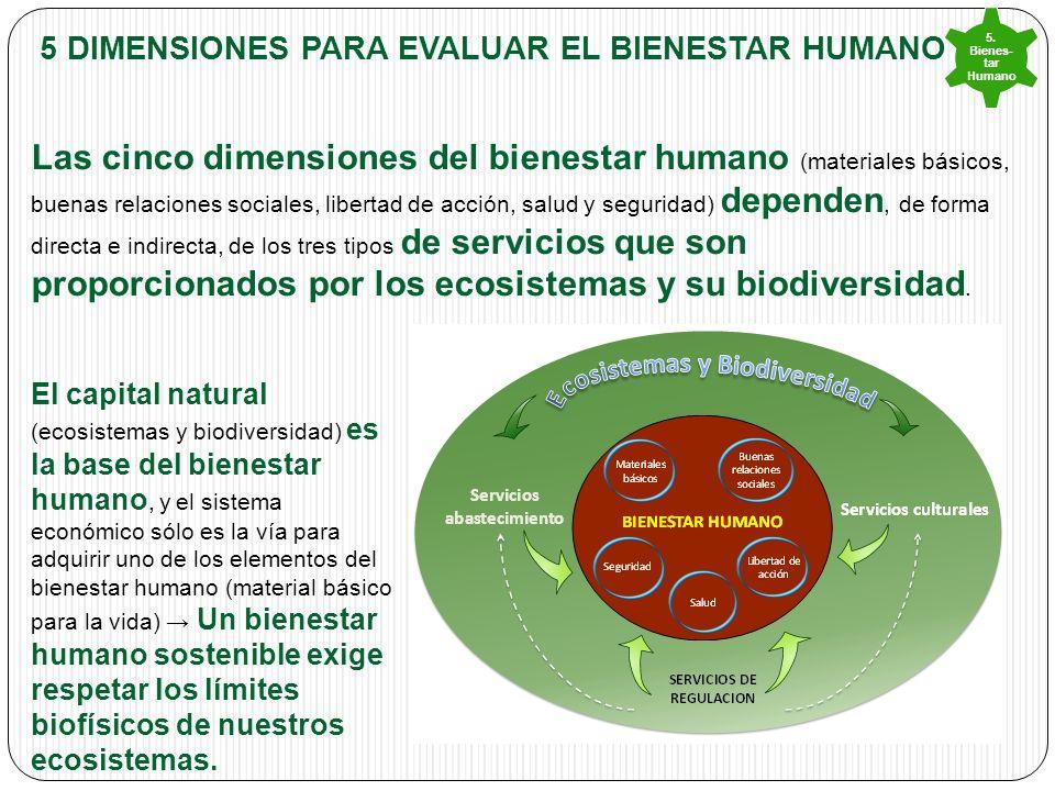5 DIMENSIONES PARA EVALUAR EL Bienestar humano