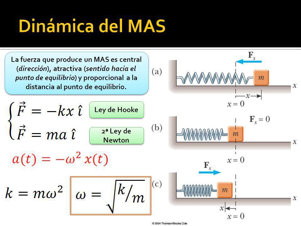 Dinámica del MAS
