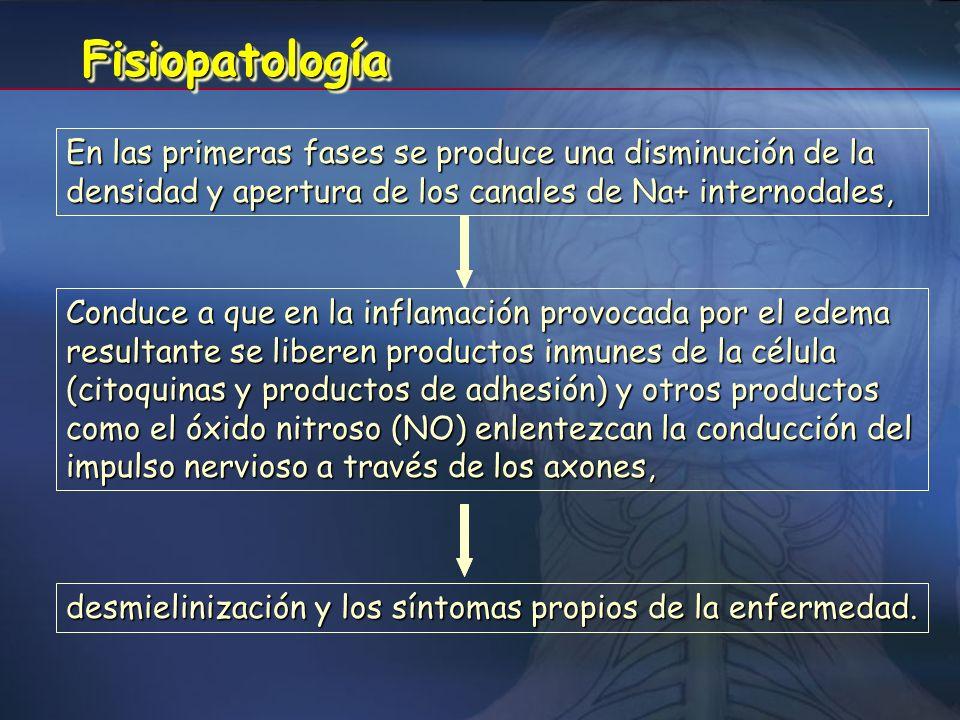Fisiopatología En las primeras fases se produce una disminución de la densidad y apertura de los canales de Na+ internodales,