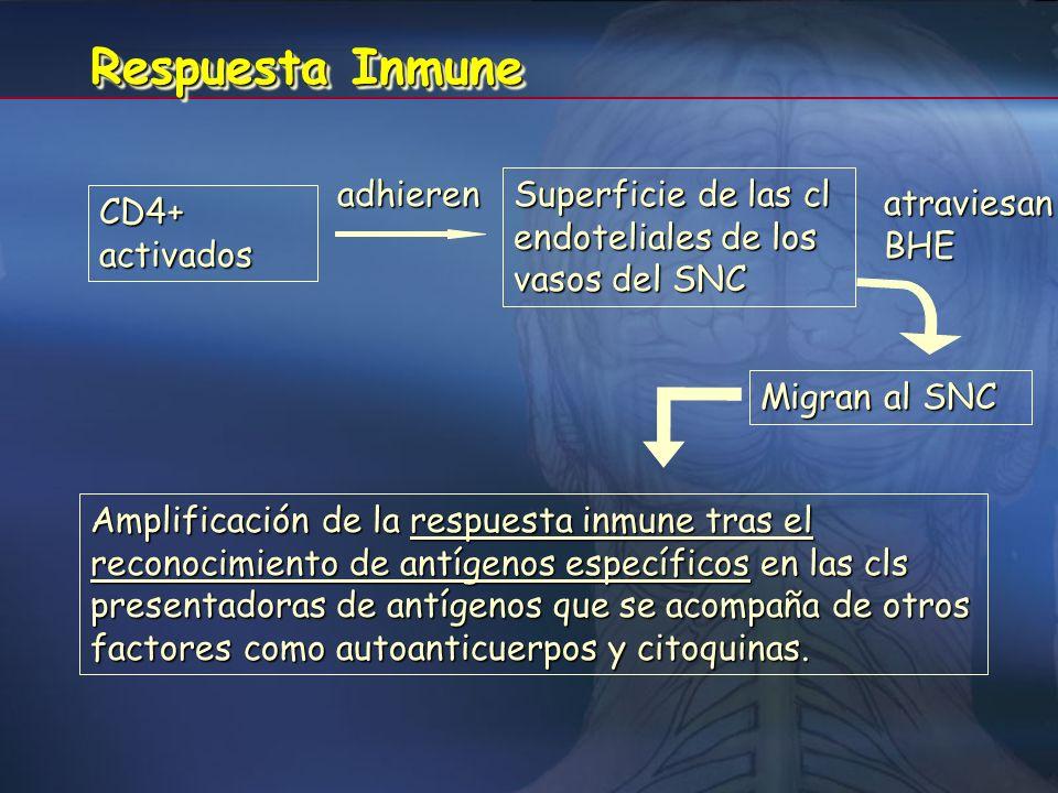 Respuesta Inmune adhieren
