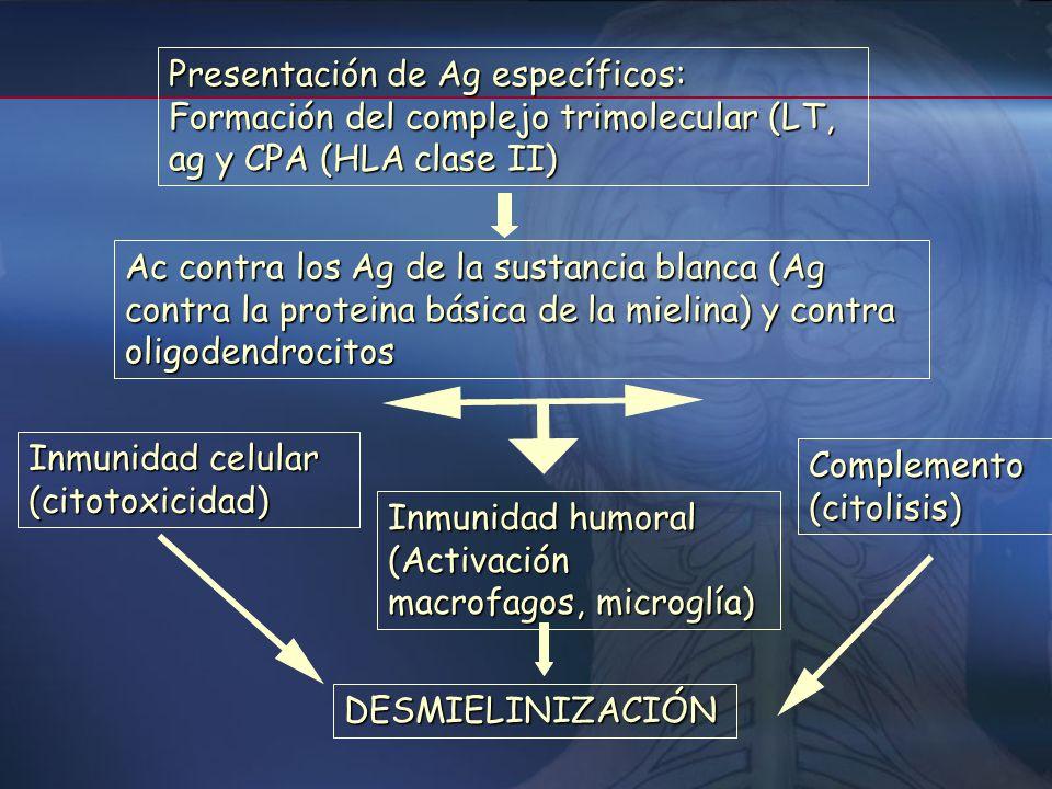 Presentación de Ag específicos: Formación del complejo trimolecular (LT, ag y CPA (HLA clase II)