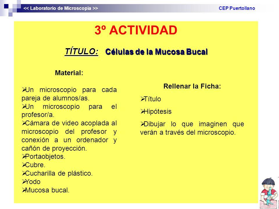 TÍTULO: Células de la Mucosa Bucal