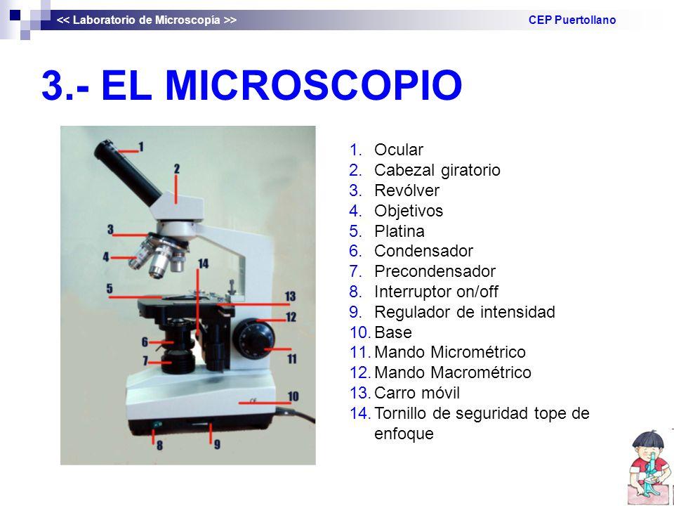 3.- EL MICROSCOPIO Ocular Cabezal giratorio Revólver Objetivos Platina