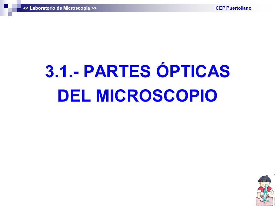3.1.- PARTES ÓPTICAS DEL MICROSCOPIO