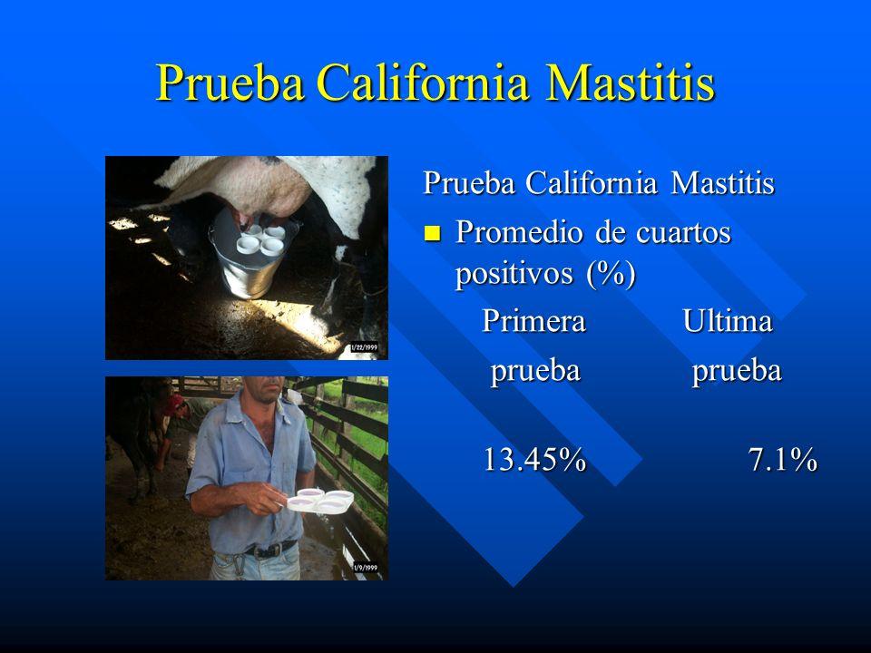 Prueba California Mastitis