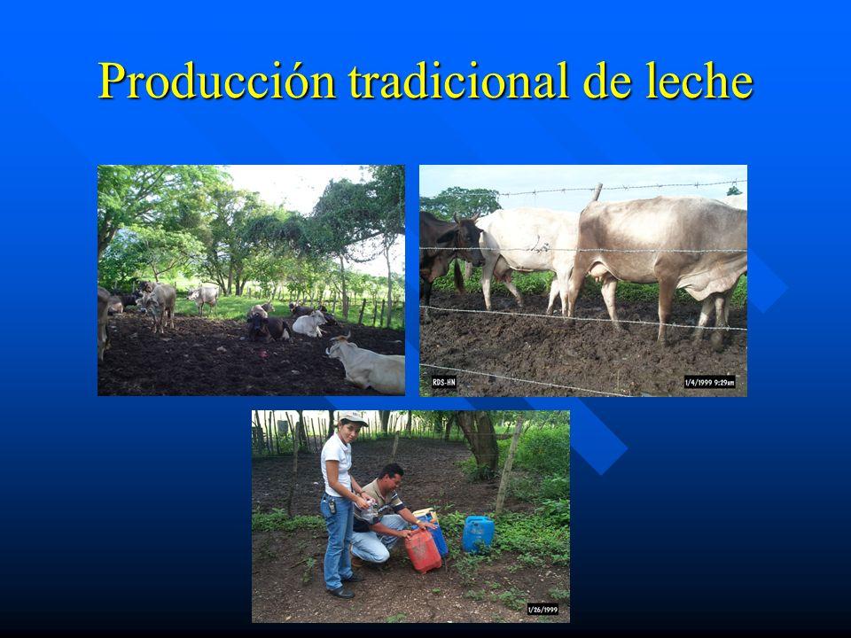 Producción tradicional de leche