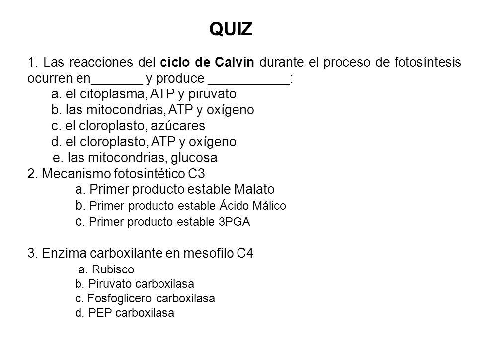 QUIZ 1. Las reacciones del ciclo de Calvin durante el proceso de fotosíntesis ocurren en_______ y produce ___________: