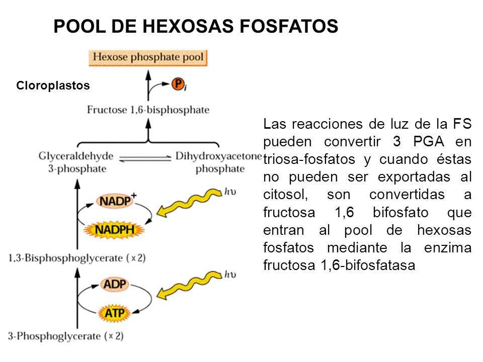 POOL DE HEXOSAS FOSFATOS