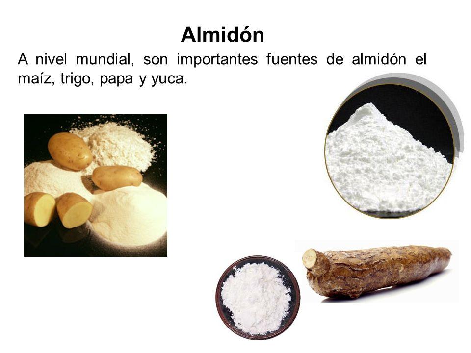 Almidón A nivel mundial, son importantes fuentes de almidón el maíz, trigo, papa y yuca.