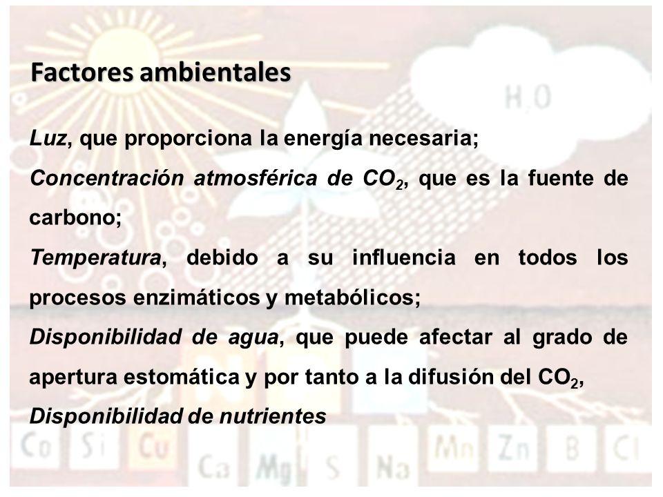 Factores ambientales Luz, que proporciona la energía necesaria;