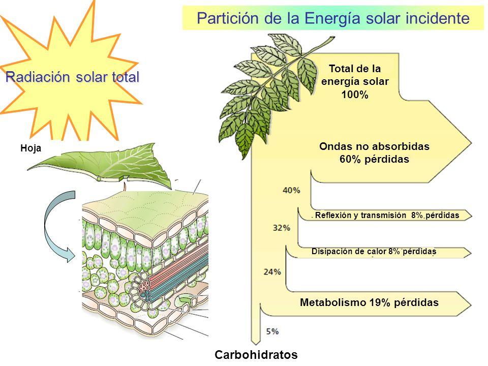 Ondas no absorbidas 60% pérdidas Total de la energía solar 100%
