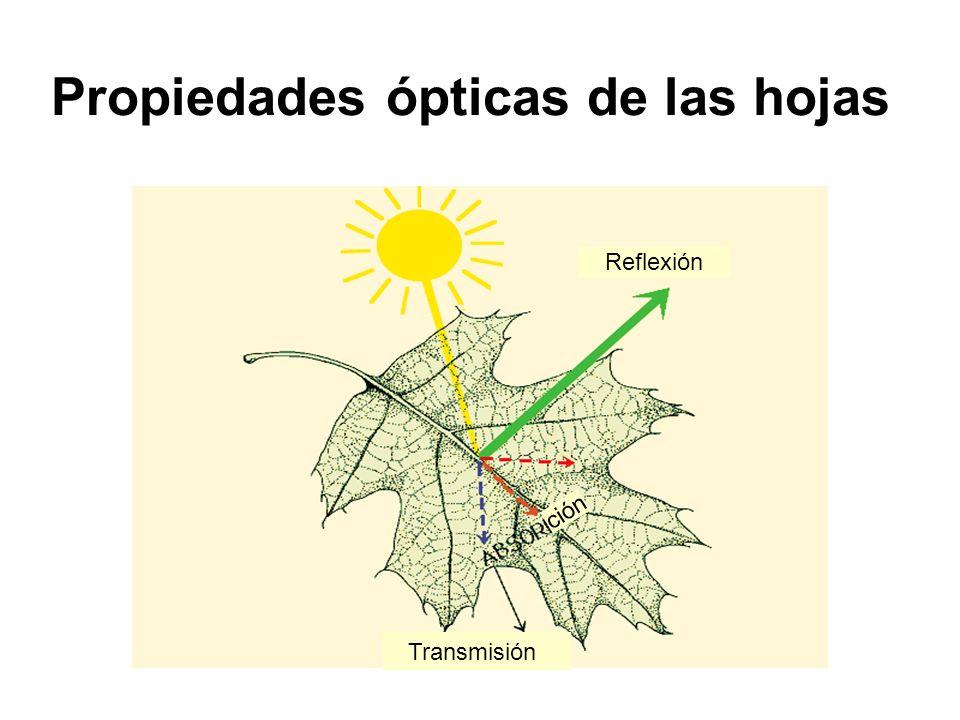 Propiedades ópticas de las hojas