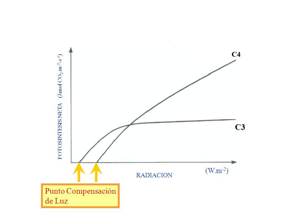 C3 Punto Compensación de Luz C4 (W.m-2) RADIACION