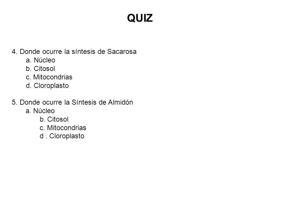 QUIZ 4. Donde ocurre la síntesis de Sacarosa a. Núcleo b. Citosol