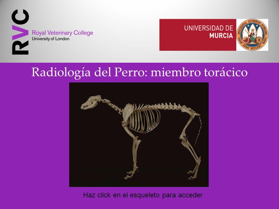 Radiología del Perro: miembro torácico