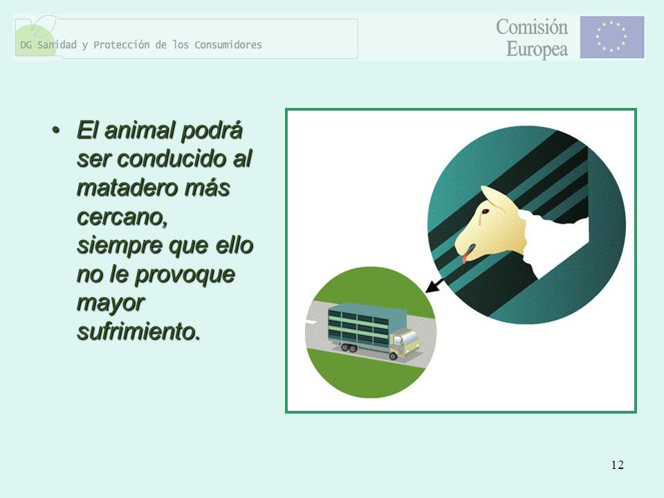El animal podrá ser conducido al matadero más cercano, siempre que ello no le provoque mayor sufrimiento.