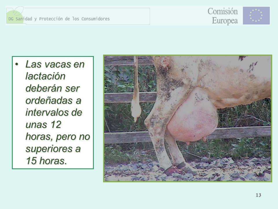Las vacas en lactación deberán ser ordeñadas a intervalos de unas 12 horas, pero no superiores a 15 horas.