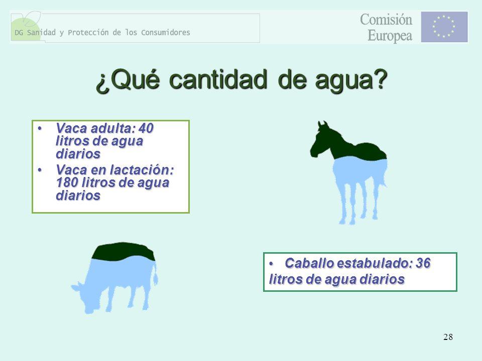 ¿Qué cantidad de agua Vaca adulta: 40 litros de agua diarios