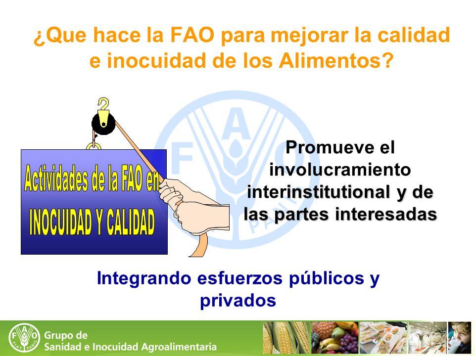 ¿Que hace la FAO para mejorar la calidad e inocuidad de los Alimentos